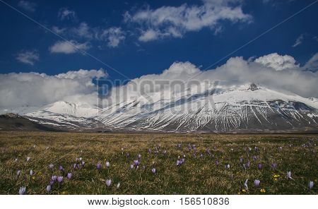 Wild flowers on Vettore mountain at National Park of Monti Sibillini in Umbria