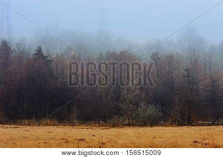 foggy forest edge and sand along the road