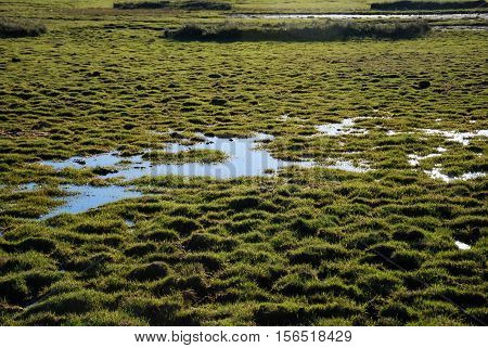 Bright green marshland with water and tufts