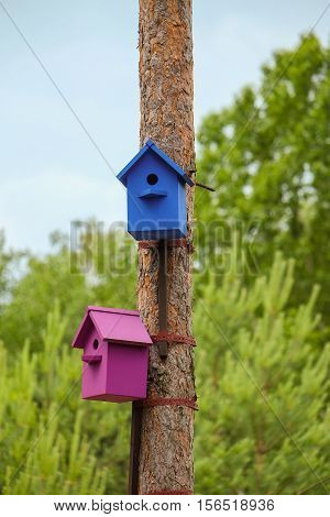 Two colored birdhouses on tree trunks. Blue and purple nesting boxes.