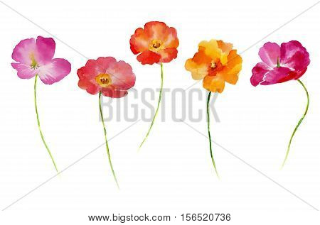 Watercolor flower set for your design. Flower set in isolated on white background. Flower Hand-drawn illustration.
