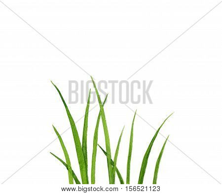 Watercolor drawing green grass, decorative herbal border, floral background, hand drawn natural template