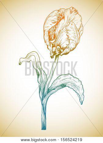 Vector Tulip.