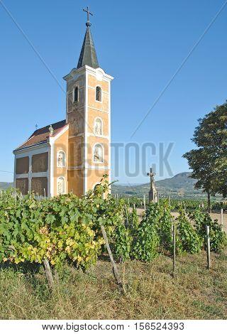 Church in Vineyard of Badacsony at Lake Balaton,Hungary