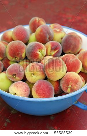 a full bowl of freshly harvested peaches