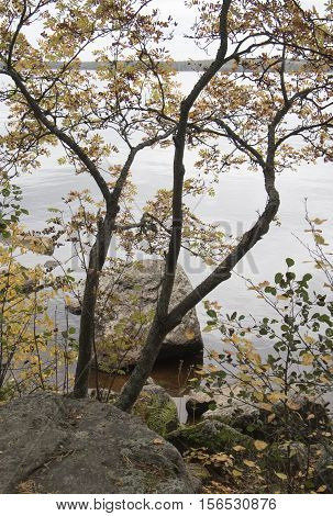 Autumn view of the river. Nature background river Bay