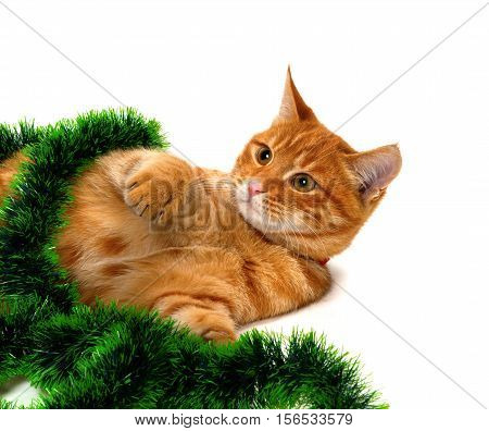 Red-headed Kitten Lying On Its Side In Christmas Tinsel