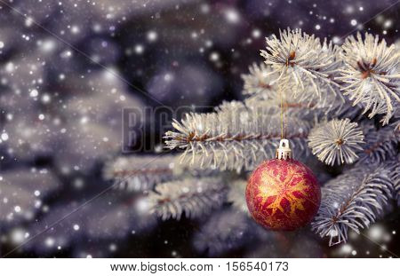 Winter scenery with snow falling and spruce covered with snow.Close up of red christmas ball on fir tree branch.