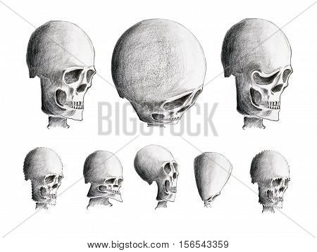 Hand drawing of the various human skulls - warning sign - design element
