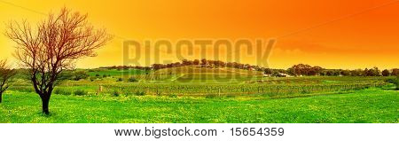 Panoramic Image of a Tree and a Vineyard at Sunset