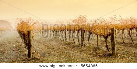 Rain pours down on Vineyard at sunrise