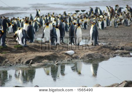 Penguins Reflecting In Water