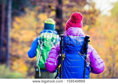 Man and woman couple hikers trekking in yellow autumn woods and mountains. Young people walking on trek trail with backpacks healthy lifestyle adventure camping on hiking trip Poland.