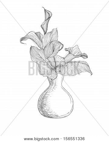Vase With Calla Lily Flowers. Linear Illustration