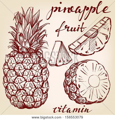 fruit pineapple set hand drawn vector llustration realistic sketch
