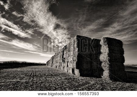 A B&W of a large stack of hay bales in north Idaho near Worley.