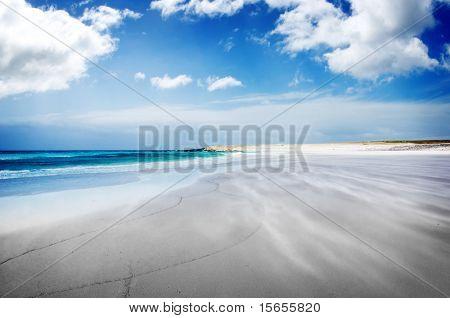 Windswept Beach at Volunteer Point, Falkland Islands
