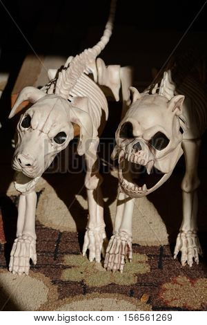 The dogs of hell: plastic dog skeletons emerging from shadow