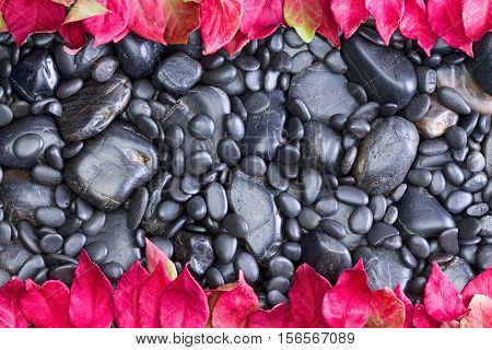 High Angle Full Frame View of Black Smooth River Rocks of Various Sizes Bordered by Vibrant Red Autumn Leaves from Deciduous Trees