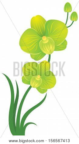 Orchid flower green and yellow colors Stock vector illustration