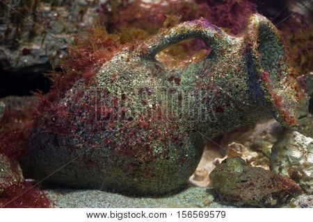 Ancient Greek ceramic vase on the sea bottom.