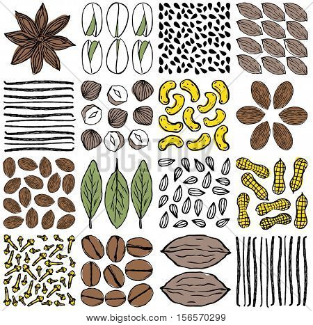 SET OF NUTS, SEEDS AND HERBS AS PATTERNS. Vector illustration file. For design projects, prints, Packing, fashion, brand elements etc.