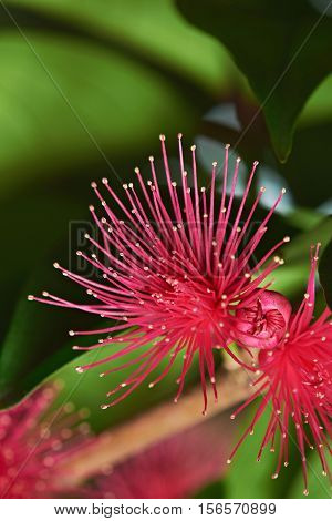 Pink Perote Flower On Tree