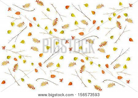 Foliage isolated on white background. Golden autumn. Composition.