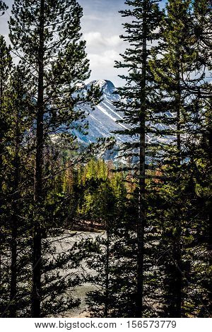 Longs Peak in Rocky Mountain National Park is framed by tall pine silhouettes