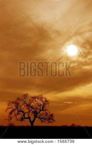 Lone Winter Oak Tree