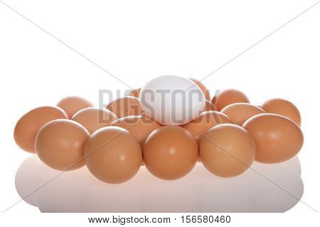 One white egg on top of Many Organic speckled brown eggs with condensation from being cold on a reflective surface isolated on white