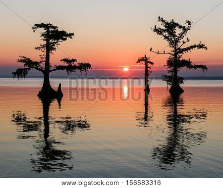 The sun rises casting reflections on the cypress trees