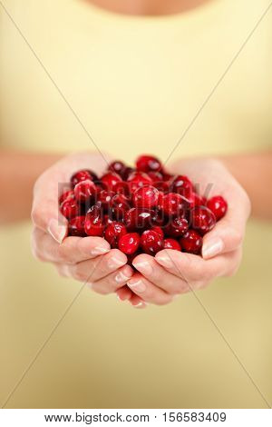 Ripe red cranberry fruit concept. Closeup of women cupped hands holding many fresh cranberries. Female adult showing a handful of berries cranberries in studio. Healthy food fruits diet.