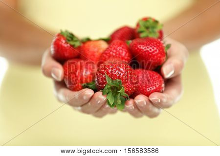 Closeup of women cupped hands holding many fresh strawberries. Female adult showing a handful of red berries strawberries in studio. Healhty food fruits diet.