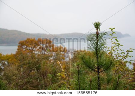 Landscape with apex of the young spruce on foreground. Calm gulf on the blurred background.