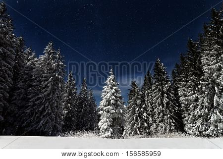snow covered green pine trees amidst stars