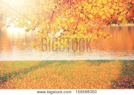 Bright autumn background. Yellow leaves illuminated by sun. Color leaves on ground.