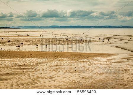 Seagulls On The Portobello Beach At Low Tide