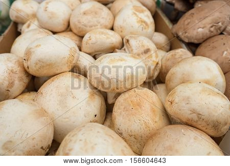 fresh champignons for sale at the city market
