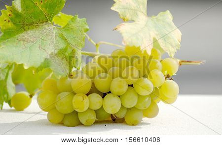 picure of a ripe white grape on sunny day