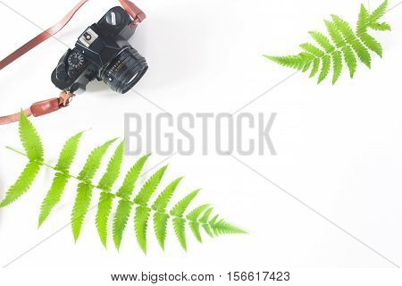Flat lay of camera and fern leaves isolated on white background with copy space