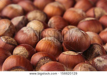Hazelnut background. Pile of selected hazel close-up. For vegetarians.
