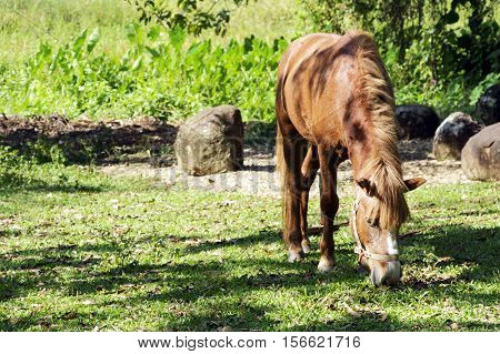 Brown horse pasturing in a rural landscape.