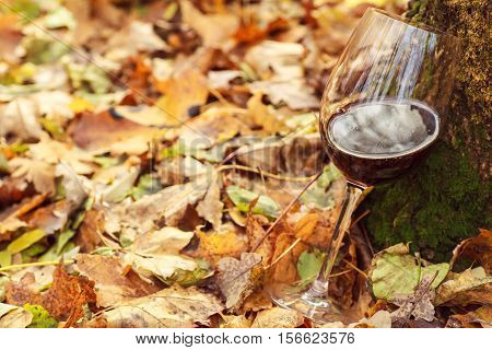Red Wine In Autumn Forest