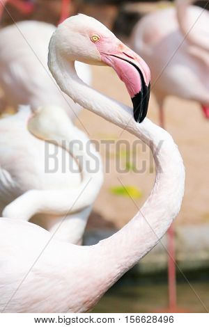 Close Up Flamingos In Zoo