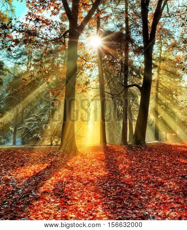 Beatifull morning sunrays in late autumn forest, trees covered with snow on background