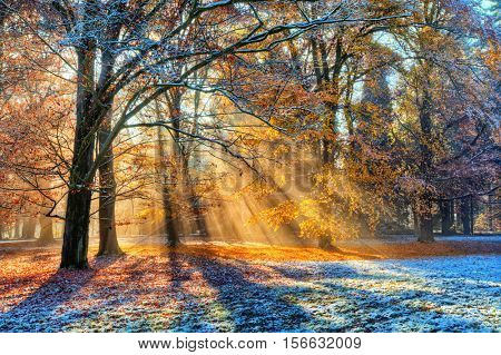 Beatifull morning sunrays in winter forest with amazing sun beams in fog