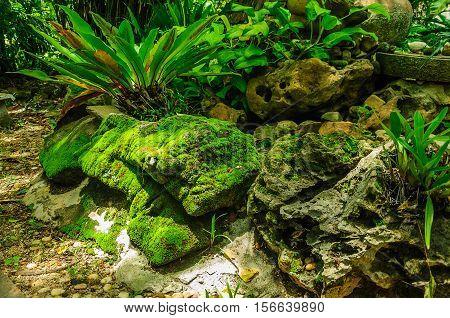 Green moss on the stone with Asplenium nidus plant