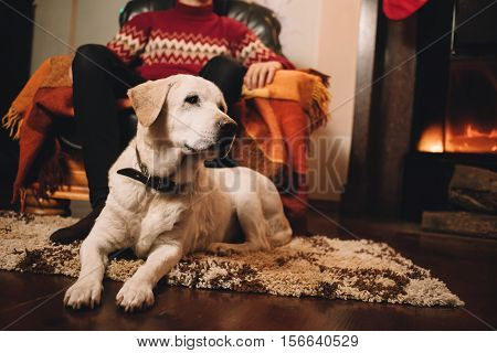 The dog on the background of the owner. Pet warms by the fireplace