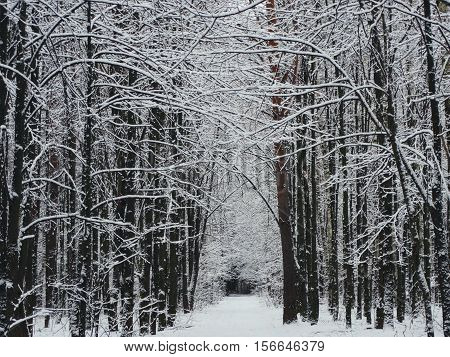 Winter road in the forest nature snow landscape background outdoor tunnel wallpaper